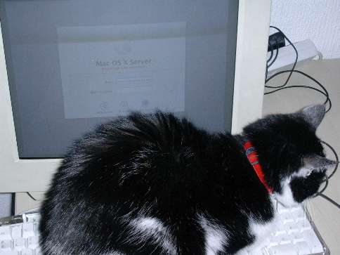 Poopsy sur clavier