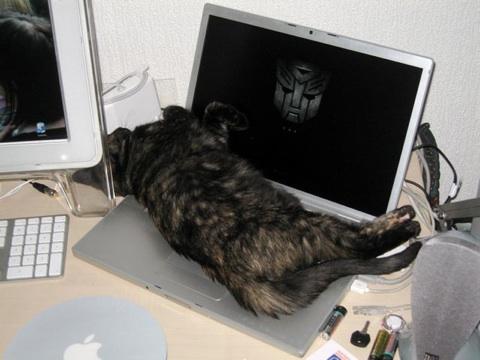 Un Leopard bien installé sur un MacBook Pro